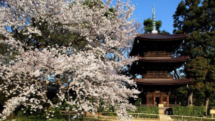 4 Best Cities to See Spring Blooms