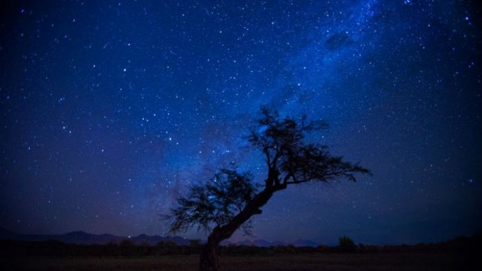 tree with starry skies