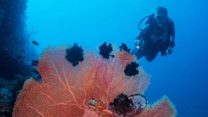 scuba diver under the sea