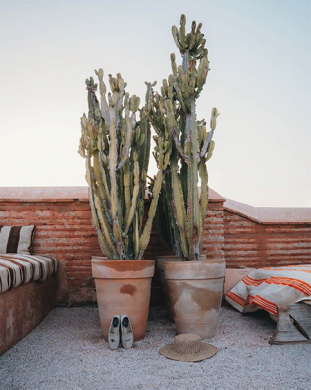Cacti on the rooftops at El Fenn