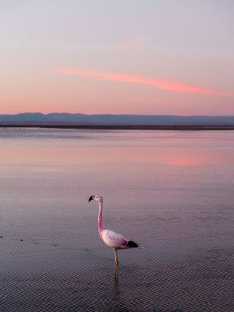 Tierra Atacama Hotel & Spa excursions flamingos
