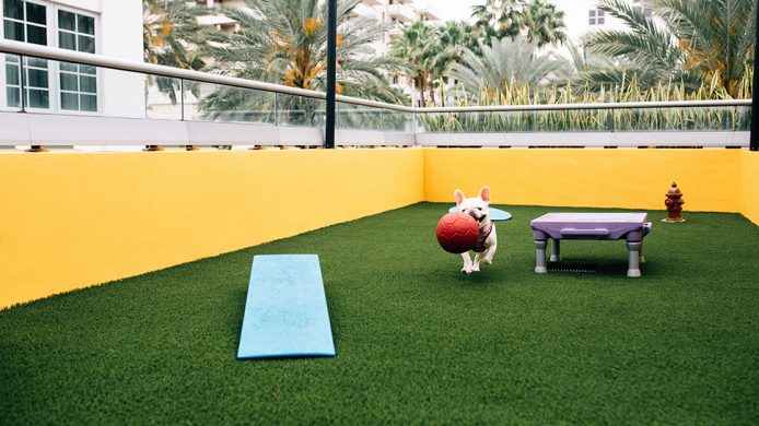 Dog carrying ball at the Hyatt Centric South Beach's wooftop