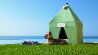 Dog in an oceanfront tent at Las Ventanas al Paraiso