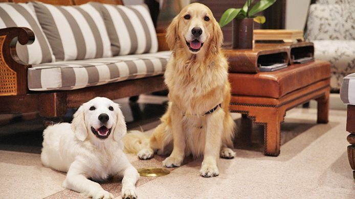 Golden retrievers Betsy and Rosa at The Betsy hotel's lobby lounge