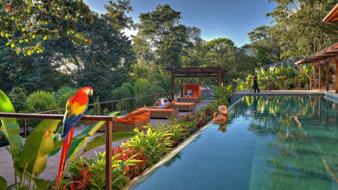 Nayara Springs resort private pool surrounded by jungle and with a parrot in the foreground