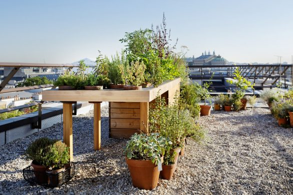 Mandarin Oriental Paris' rooftop garden