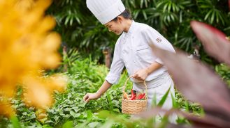 Chef picking herbs at The Peninsula Bangkok's Naturally Peninsula garden
