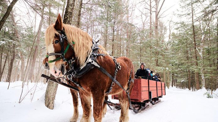 Horse-drawn carriage riding through snow at the Fairmont Le Château Montebello